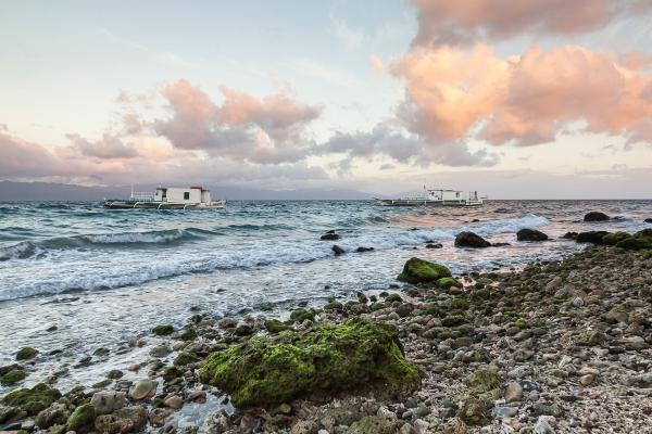 FOSSILISED CORAL BEACH #1 - PADRE BURGOS