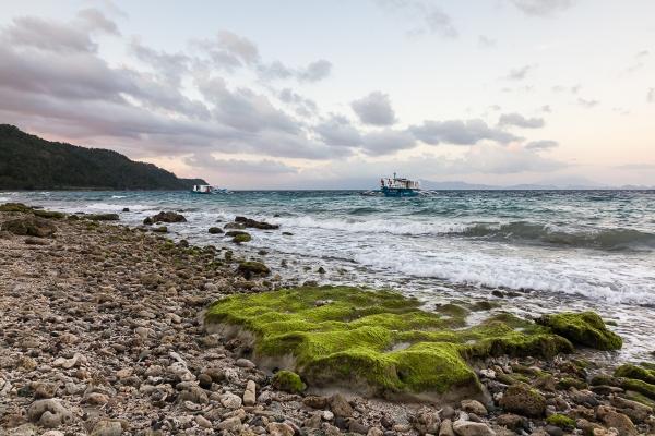FOSSILISED CORAL BEACH #2 - PADRE BURGOS