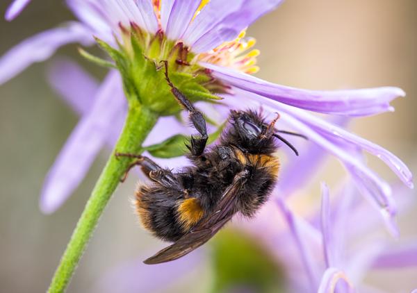 Bumblebee Wash