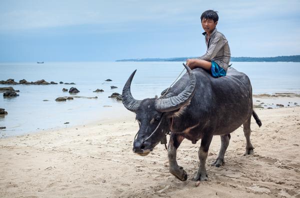 Riding Water Buffalo Along the Beach at Prek Svay 2