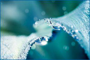 underwater flower photo